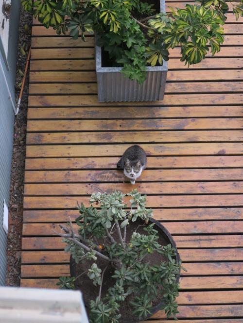 ネコその2 翌朝。階下のテラスにホテルの飼い猫が。おはよう。