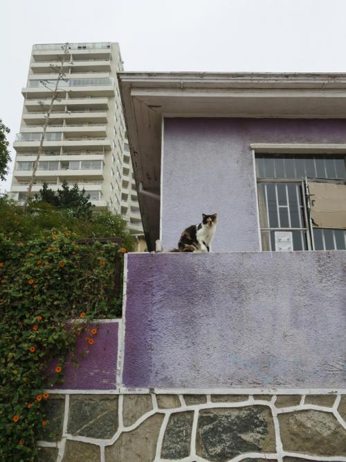 ネコその3 紫色の外壁がいいかんじ。