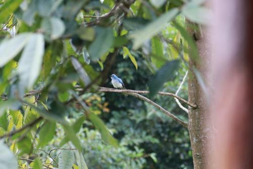 部屋のベランダの目の前に小鳥が遊びに来ます。<br />この青い鳥、鳴き声も可愛らしく癒されました。