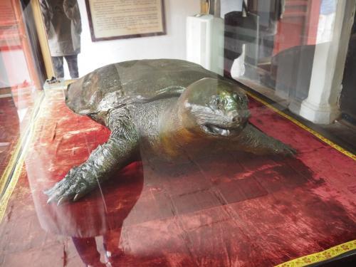 敷地内の建物の中には大きな亀?スッポン?様がいました。<br /><br /><br />ホアンキエム湖は大亀が住んでいるという伝説があるそうです。<br /><br /><br /><br /><br />15分ほどぐるっとし、一通りみて満足したので次に向かいます。
