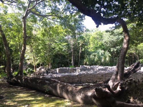 宮殿からプラザの先にある8本柱の神殿<br /><br />生命力に満ち溢れた熱帯樹が遺跡を引き立てています