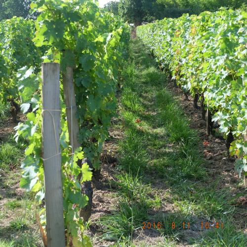 2014年はアルザスの(白ワインが有名)、2015年はプロヴァンスの(私の行ったところはロゼと白が有名でした)、そして2016年はボルドー地方の(生産量は赤が9割)、ぶどう畑を少したづねましたが、気候も品種も土も空気も地層もそして作り方もスペシャリテもそれぞれ違います。テロワ-です。<br /><br />ボルドーの昼間は酷暑で朝晩ひんやりする気候は、繊細なフルボディの赤ワインを作るのに適しているのですかね。でも重すぎてドシン、じゃないのがすごい。<br />