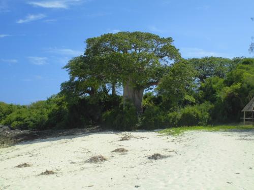 アフリカのシンボル、バオバブの木もありました!!