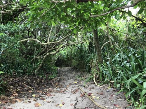 昼食後、お店近くの雑木林みたいなところを抜けて、
