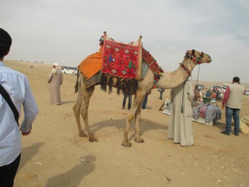 観光客を乗せるラクダが沢山います。<br /><br />ラクダかわいいんだけど、乗り降りするの大変なんだよね。