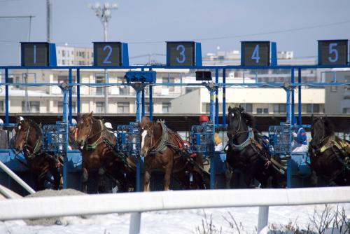 以下、奮闘するばん馬たちの写真です