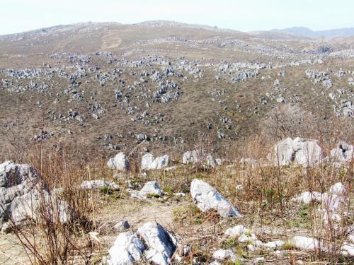 秋吉台<br /><br />おおよそ3億5千万年前に南方の海でサンゴ礁として誕生し、長い年月を経て現在のカルスト台地を形成しました。