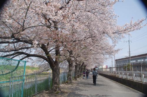 散って行く桜は少し寂しさを感じる。