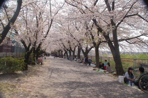 桜のシーズンだというのに、それほど人が多くないところが良い。人々は桜の木の下に思い思いにお弁当を広げ、お花見を楽しんでいた。もちろん、私たちもお弁当を広げて食べた。