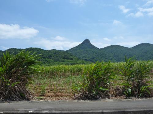 昨日登った野底岳を逆側の野底地区から見てみると、本当に尖がった山だわ。