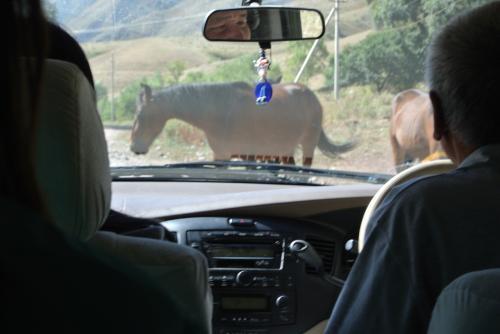 そこから滝へ出発。馬渋滞してます。