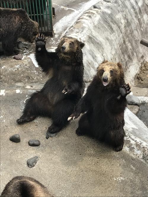 餌が欲しくて手を挙げています(笑)<br />可愛い~