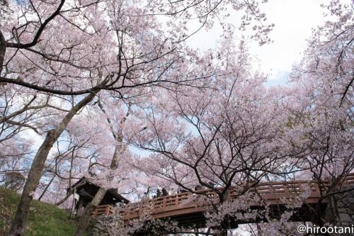 桜雲橋をお堀から見上げる。フォトスポットです。