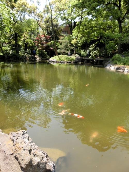池泉には放生された鯉や亀などが泳ぎ、野鳥も集まります。