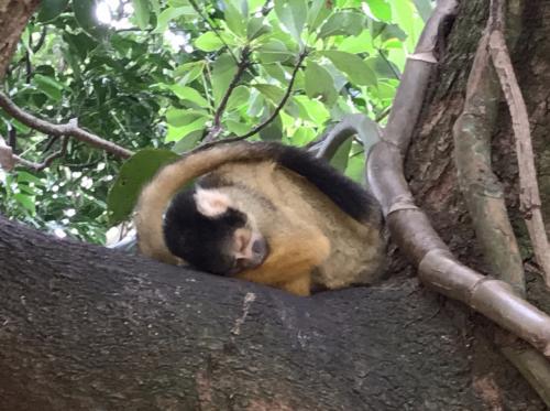 木の上にもたくさんいましたが、リスザルって突然「コテっ」と寝てしまうんですよね~<br /><br />その姿がとってもかわいい♪<br />ファミリーにはとっても楽しめる場所だと思います。