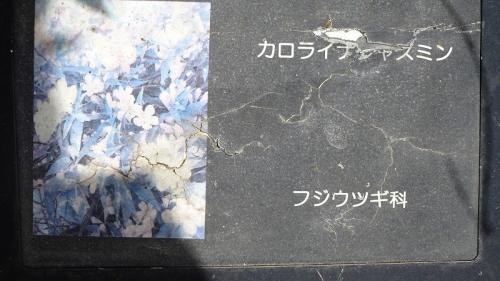 ↑の花の名。