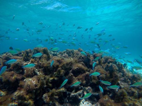 青い魚がたくさん!