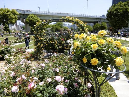 スタンダード仕立てのバラもいくつか。