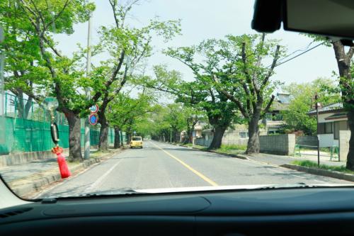 富岡町の桜並木になります。<br />このあたりは桜並木になっていて春になると桜がきれいなようです。<br /><br />もう完全な葉になっています。季節は春から夏に写っていこうとしているところです。
