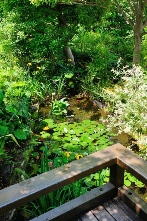 『せせらぎの杜』というだけあって、本当にせせらぎの音がして・・・<br />中まで入っていくと、鯉が泳ぐ小さな池がありました。その池には、