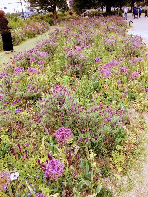 紫に統一された花壇