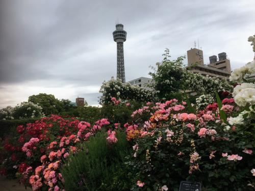 バラとマリンタワー