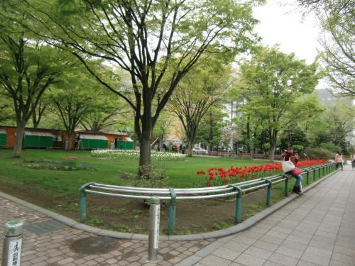 大通公園を歩いています。<br />花壇の整備も進んで来ています。<br />チューリップ。
