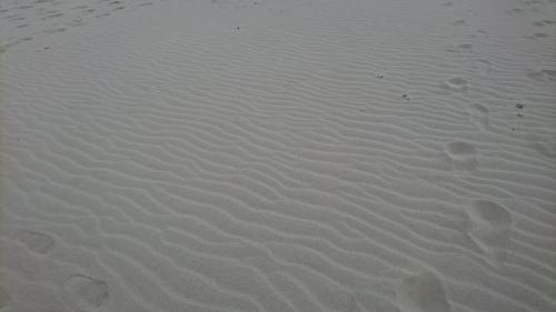 朝だったので砂紋が綺麗。