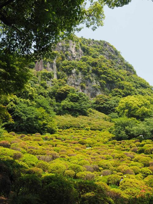 中国っぽい山で雰囲気あります。<br />5月の上旬まで手前のツツジが色付いてて綺麗だったみたいです。