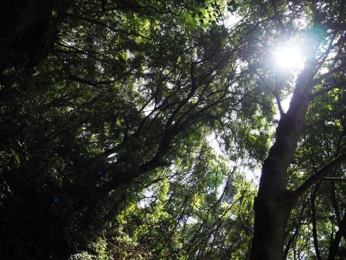 この日は気温30度近く暑かったし、結構勾配もあって汗だく。<br />でも木陰は涼しくいい森林浴になりました。