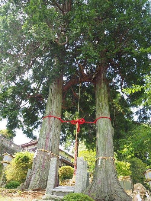 2日目はノープランだったので宿で調べてまずは武雄神社へ。<br />前日行った御船山楽園から近かったです。<br />夫婦ヒノキが迎えてくれました。