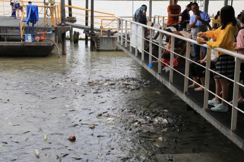 チャオプラヤー川沿いにあり魚に餌を上げることができます