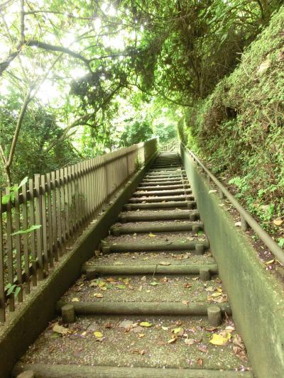 初めて訪れたのですが、こちらの公園は動物園エリアと植物区エリアがあり、なかなかの広さです。<br />まずは植物区エリアからスタートし、園内を散策。<br />最初は上り上りで、しばらく歩くと・・・<br />