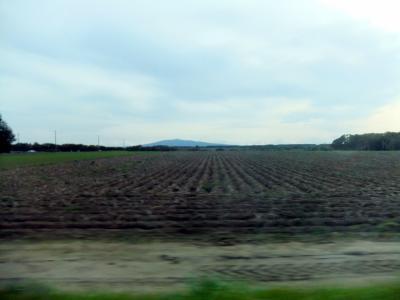 この写真は、道端の畑を撮ったもの。北海道は、一枚の畑がご覧の通りとても広い。