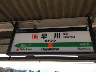 小田原市場食堂へ行くために東海道線で向かいます<br />各駅でもアクティでも対して時間変わらず、小田原の一つ先の早川駅へ<br />横浜から972円  有料特急を使わなくても苦にならない距離です