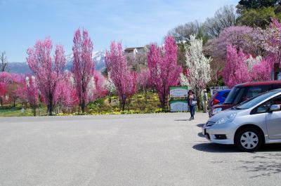 ガーデン前の駐車場<br />*駐車場の右は「天神山野球場」,毎夏「桃山運動公園野球場」と「天神山野球場」で全日本大学女子野球選手権大会(愛称:マドンナたちの甲子園)が行われます。 参考HP:http://spo-uozu.com/jyakyu/<br />*野球場フェンスの扉が閉まっていても,中のトイレやベンチが使えるよう,写真の車の後ろあたりのフェンスが人が通れるよう隙間が空いています<br />