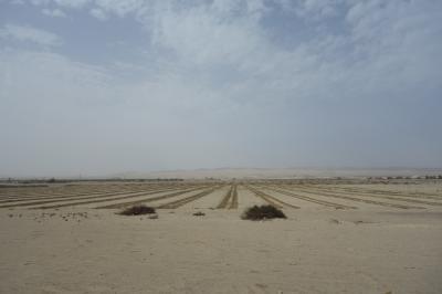 クスコの景色とは違い、砂の大地が広がっていました