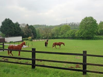 ルクセンブルクからベルギー南部の町ディナンへ向かっています。<br />牛や馬などの放牧があちこちで見られました。<br />