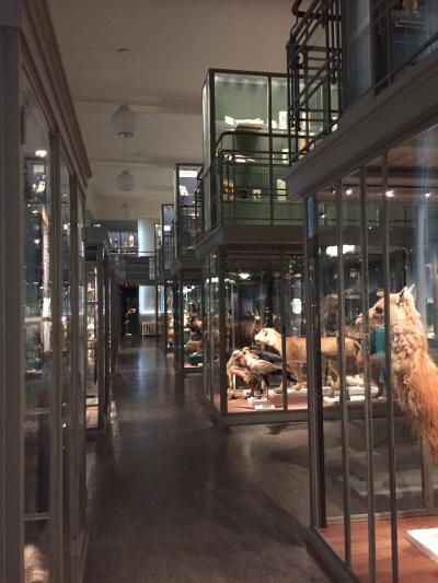 エヴォリューションミュージアム(Zoology)<br />世界中から集められた動物の展示。