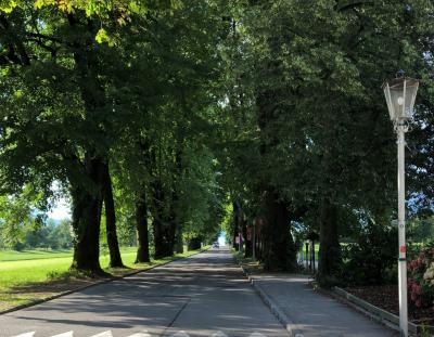 並木道。湖に続いてます。