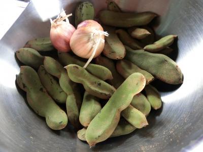これは枝豆じゃないんですよ。<br /><br />なんだと思いますか?<br /><br />ベイビータマリンドなんですよ。<br /><br />普段目にするタマリンドって茶色くてもっと大きいのですが、これはまだ青くて未熟なタイプ。<br />初めてみました。