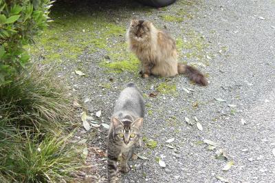 飯沢の2匹の猫たち。
