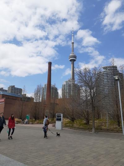 一週間ほどひどい天気のあと、5月3週目以降、やっと春らしい陽気がきました!<br />オンタリオ湖ほとりのウォーターフロントにやってきました。CN tower がみえます。
