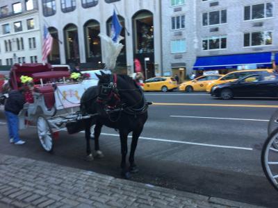 これだけの大都市に馬車があってびっくり。(背景にはタクシー(笑))