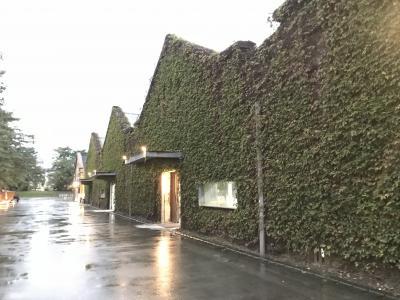 昔のお酒工場の建物ですかね。<br />壁面緑化されてました。