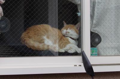 海照寺手前のお宅の猫。