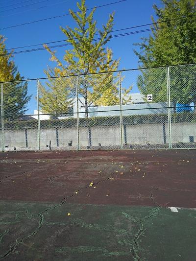 テニス教室のコートに、だいぶ銀杏の黄色い葉が落ちていました。