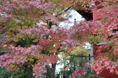 千葉県松戸市 本土寺の紅葉