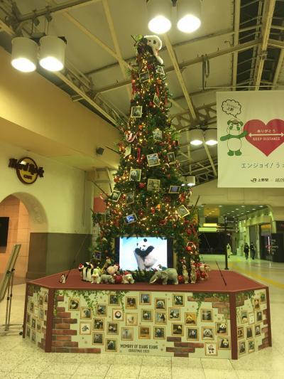 11月に入り上野駅にもクリスマスツリーが登場。