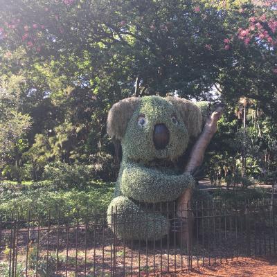シドニーハーバー周辺を散策しました。<br />公園の中に、コアラを見つけました!